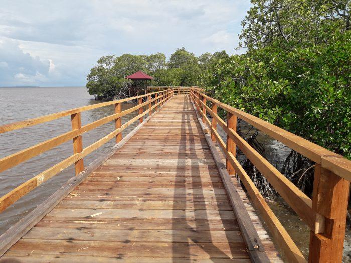 tracking-mangrove-1-e1519049073132